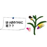 はっぱのうらに花??